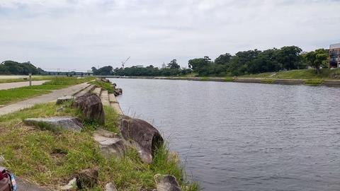 210606 乙川下流側DSC_0159