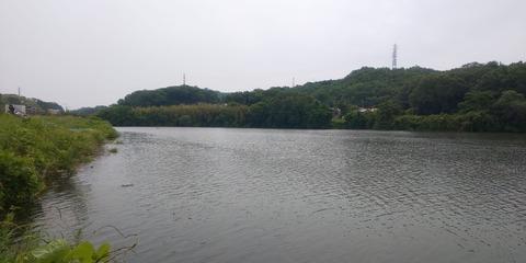 190602 豊田市水源公園(上流側)DSC_0114-1