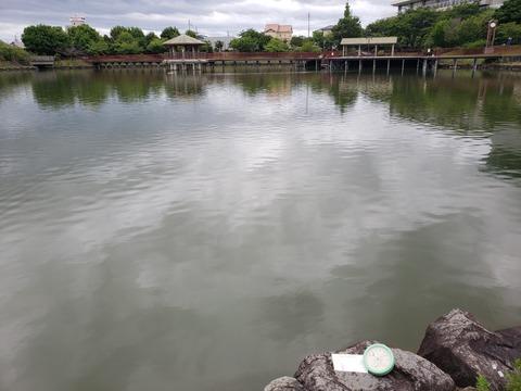 今池採取場所