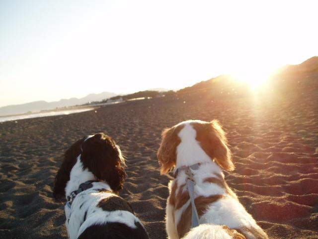 夕陽を見つめる二人1