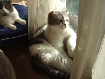 華とのんびり日光浴
