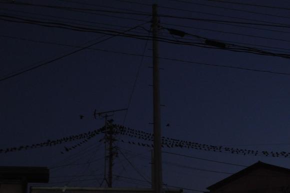 DSC_0676