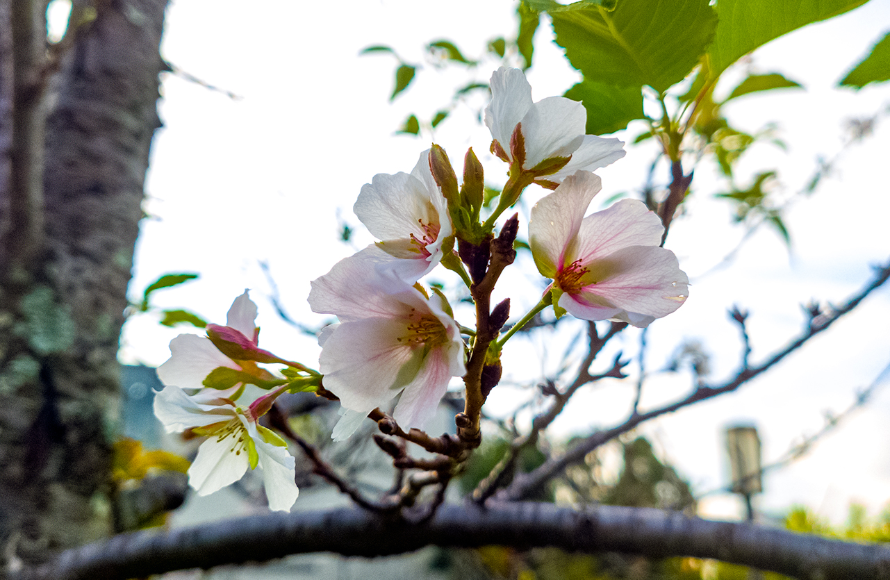 Crazy_bloom