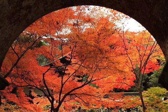 京都一人旅 799^^
