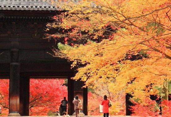 京都一人旅^-^