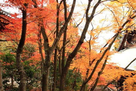 京都一人旅 916^^