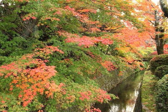 京都一人旅 949^^