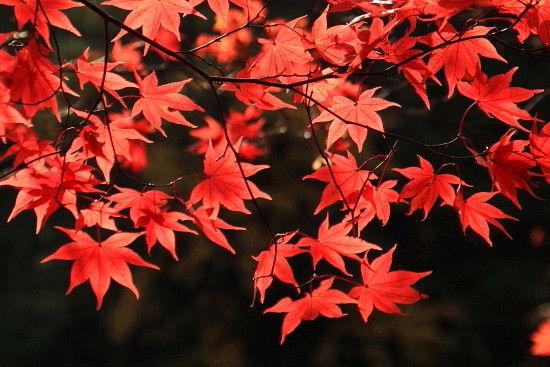 京都一人旅^-^♪