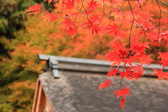 京都一人旅 ^-^v