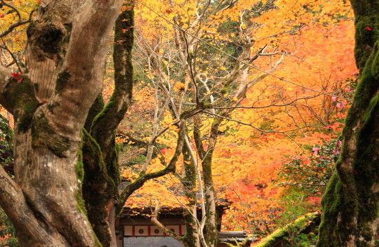 京都一人旅 412^^