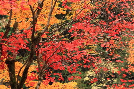 京都一人旅 474^^