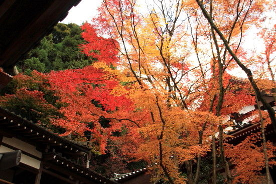 京都一人旅 913^^