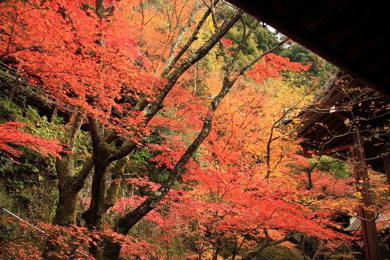 京都一人旅 900^^