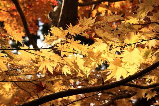 京都一人旅 346^^