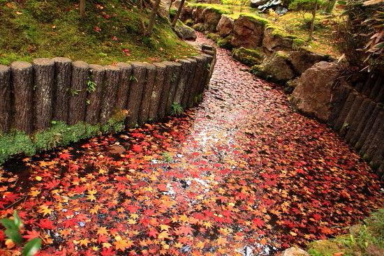 京都一人旅 658^^