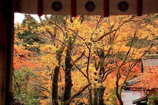 京都一人旅 483^^