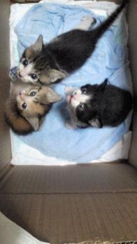 Cats from Tagajyo b