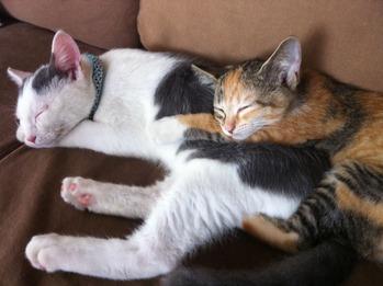Cats from Tagajyo f