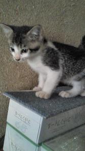 Cats from Tagajyo c