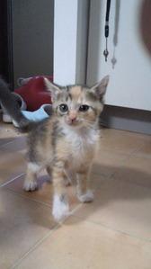 Cats from Tagajyo e