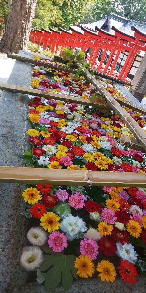 小樽祭り!