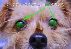 シャンプー後の角膜障害像