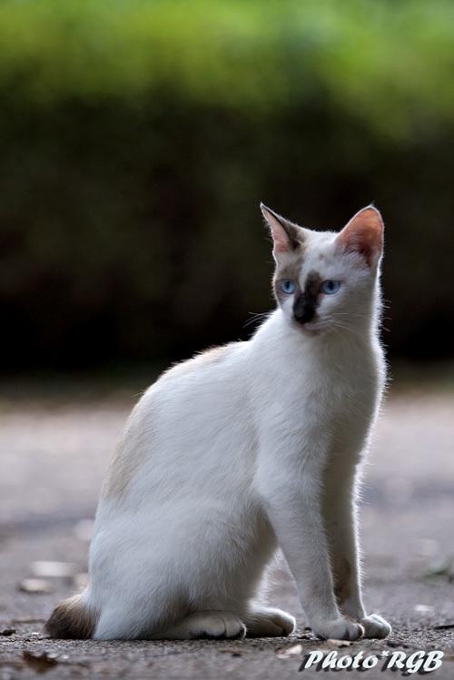 ノラとは思えない猫たち 1D�