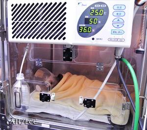 術後の酸素ルーム J1