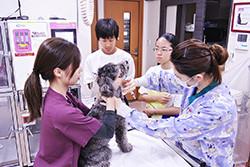診療(採血)の見学補助