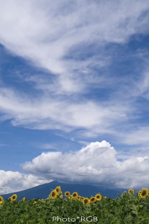 ヒマワリ畑と八ヶ岳 D300