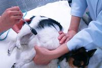 打診 脊髄反射 大腿四頭筋(膝蓋腱)反射