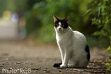 ペット 外猫 地域猫