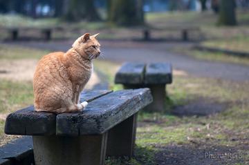 地域ネコ A local cat  d3h