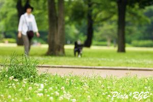 視力回復 公園散歩 D2Xs