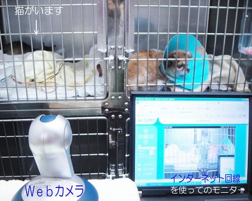 ネットワークカメラ: インターネット回線によるモニター