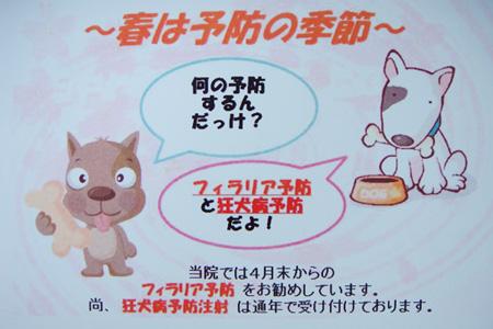 DM フィラリア予防 & 狂犬病予防