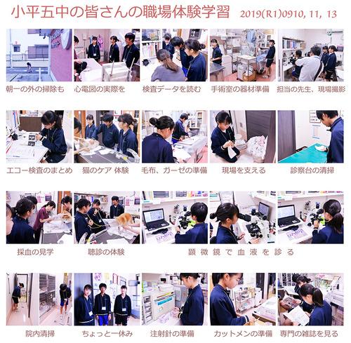 中学生(小平五中)の体験学習  2019(R1)0910  11  13  いろいろなことを体験してもらいました。