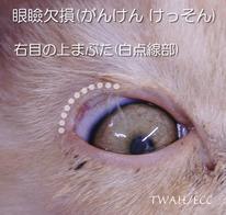 眼瞼欠損(がんけんけっそん) Eyelid dysgenesis、Eyelid coloboma