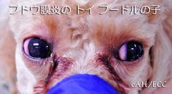 ブドウ膜炎の子(両目)
