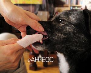 愛犬ライカのオーラルケア