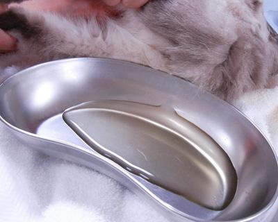 猫のおしっこ SNY-T9