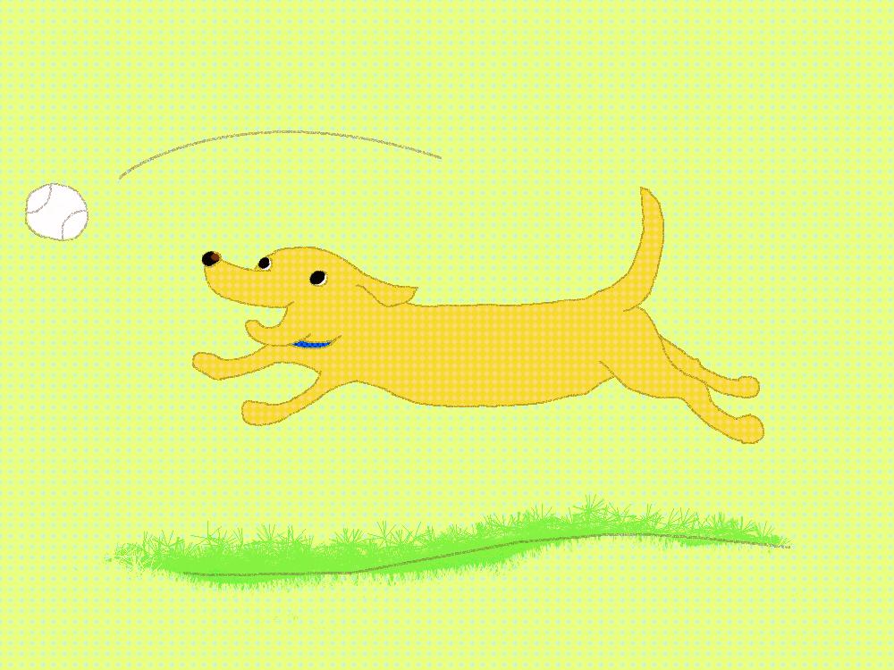 ボール遊びの犬