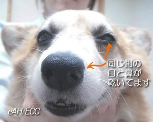 目と鼻の同側が乾く