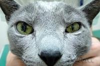 瞳(ひとみ)の大きさが違う! HJI BNT **0054*6300**