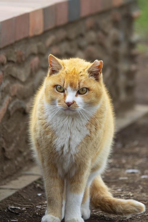 地域猫 Regional  Cat Street cat   rx10m3