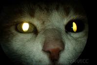 瞳(ひとみ)の大きさが違う! ChD SNKK **0052*9700**