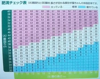 猫の肥満チェック表