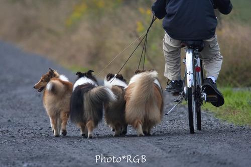 人を連れての犬たちの散歩