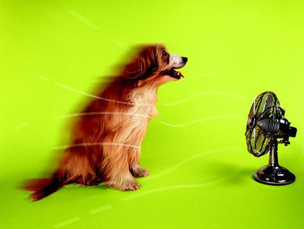 涼しい〜! みなさ〜ん、暑さにご用心!