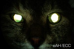 治療後 - 瞳の大きさはほぼそろう